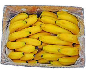 Banana Robusta India CTN Small