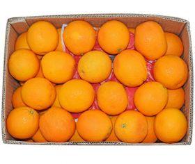 Orange Valencia Egypt CTN