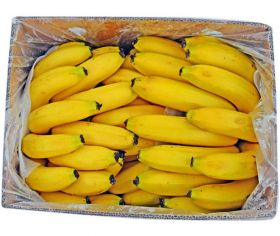 Banana Robusta India CTN Small