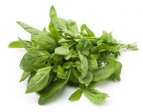 Basil Leaves Bunch