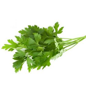 Coriander Leaves Oman
