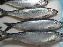 Sawa Fish 1Kg