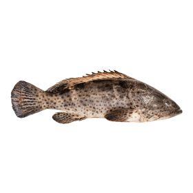 Hamoor Fish Approx. 2Kg