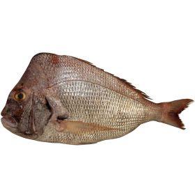 Koffer Fish 1Kg
