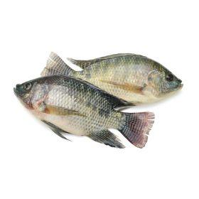 Tilapia Fish Live 1Kg