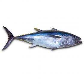 Kedar Fish 1Kg