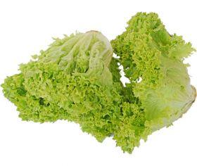 Lollo Green Holland (Lettuce) Piece