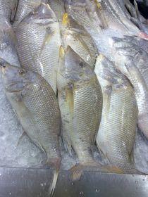 Shary Fish 1Kg